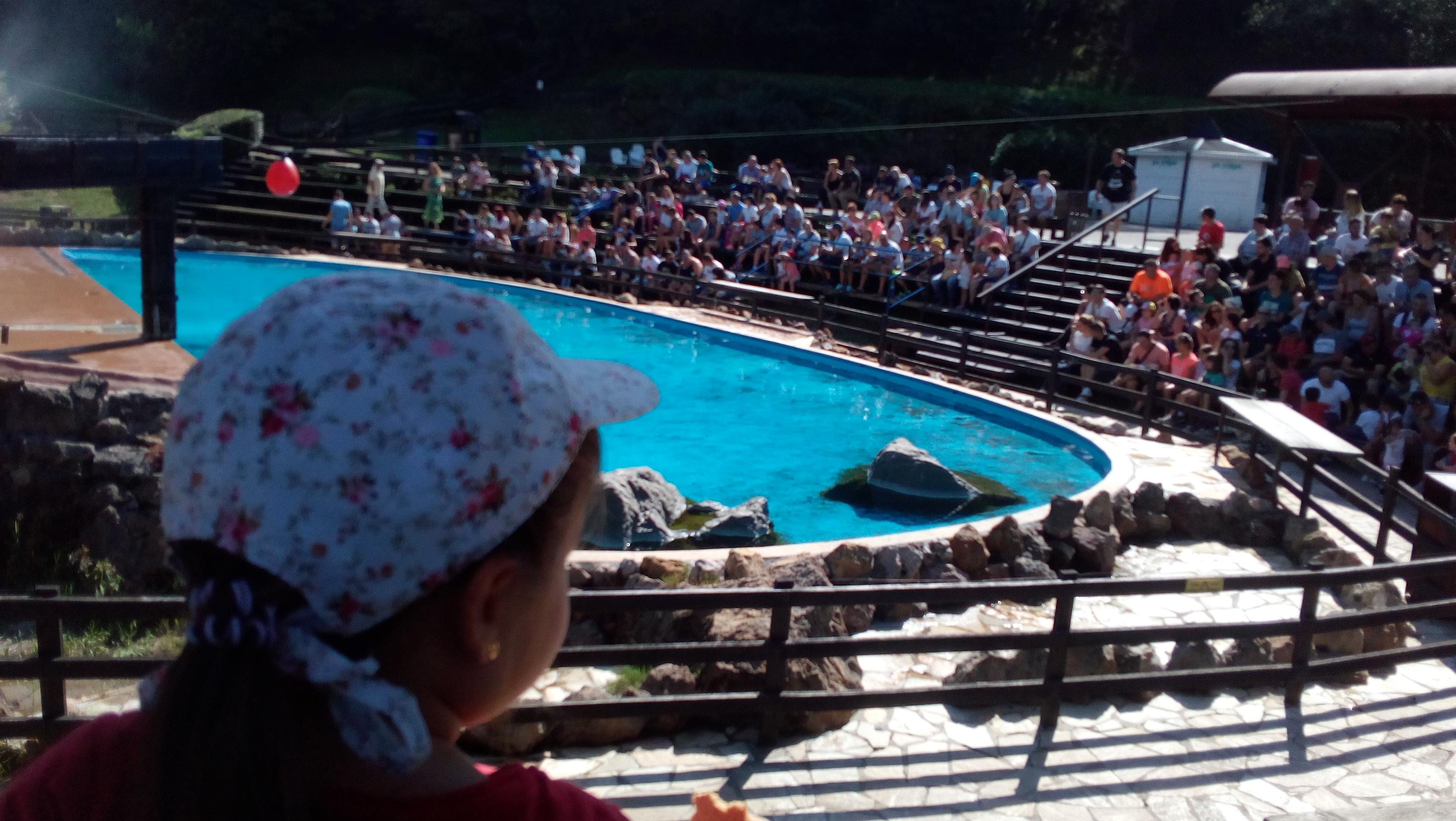Exhibición de leones marinos en el parque de Cabárceno.